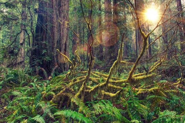 Diferencias entre bosque y selva