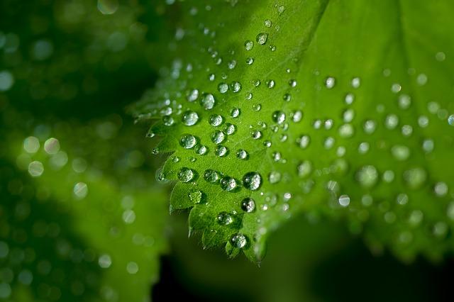 Diferencias entre fotosíntesis y respiración celular