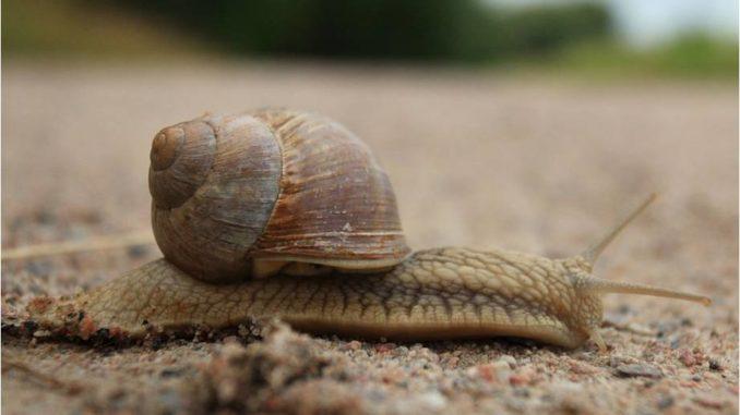 Diferencias entre las babosas y los caracoles