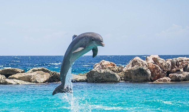 Diferencias entre delfín y tonina