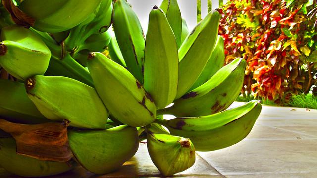 Diferencias entre plátano verde y topocho